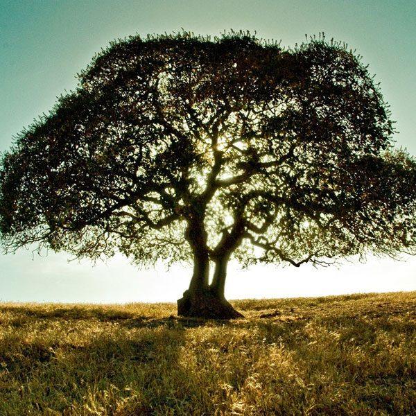 tree-2-600x600