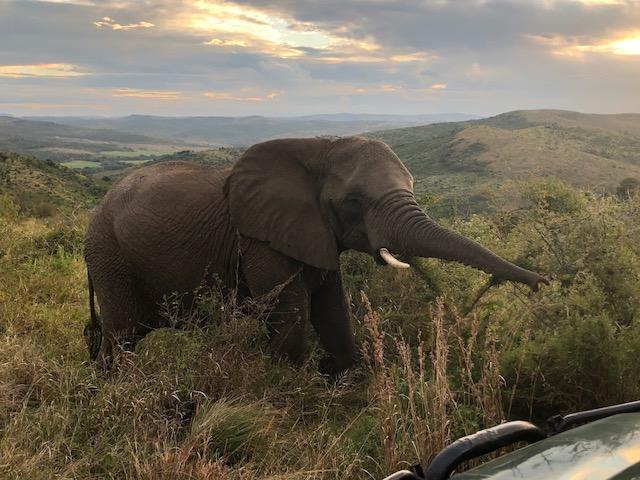 Eco Safari 2018 - elephant (c) Rosie Friehoff