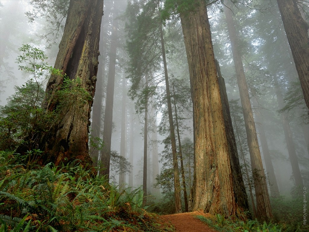 Forest - tall trees