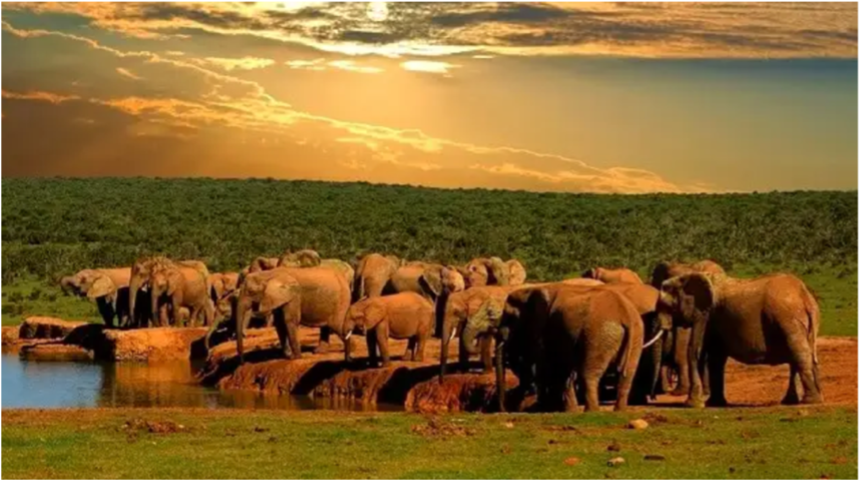Addo elephant herd not ours