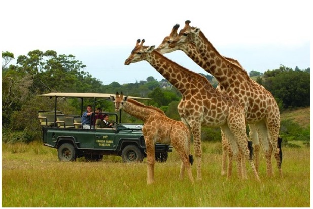 Kozuko Lodge game drive not ours