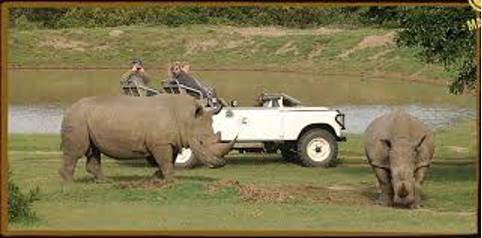 Schotia game drive not ours
